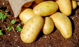 Photo of a pile of potatoes