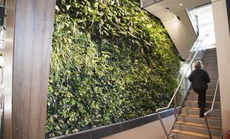 Photo of Green Wall at Bankstown Library
