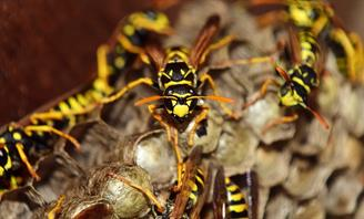 Photo of wasps