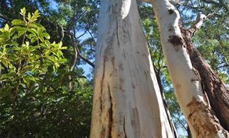 Tree Management Order
