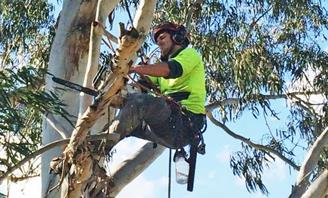 Photo of an arbourist in a tree pruning a branch