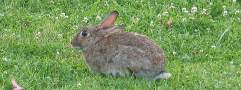 Photo of a rabbit sitting in grass